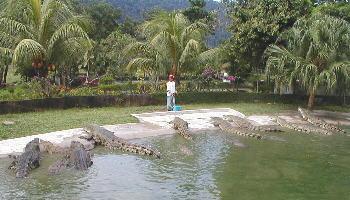 знаменитые крокодиловые фермы