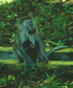 заповедник Pangkor Forest Reserve, Пангкор, Малайзия